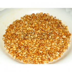 Elsa Roasted  Barley (Kolo)